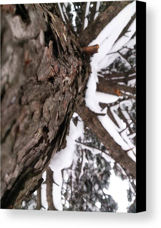 Winter Canvas Print featuring the photograph Winter by Lucy D