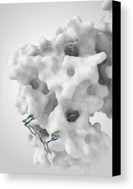 Molecule Canvas Print featuring the photograph Cancer Protein And Drug Complex by Ramon Andrade 3dciencia