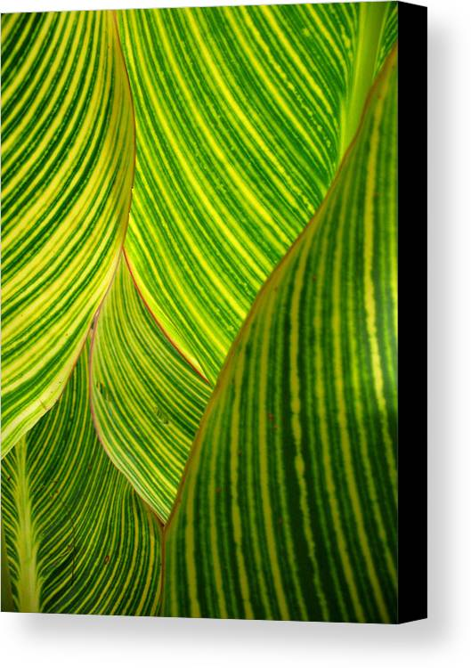 Vertical Canvas Print featuring the photograph Dwarf Canna Lily by Brenda Foran