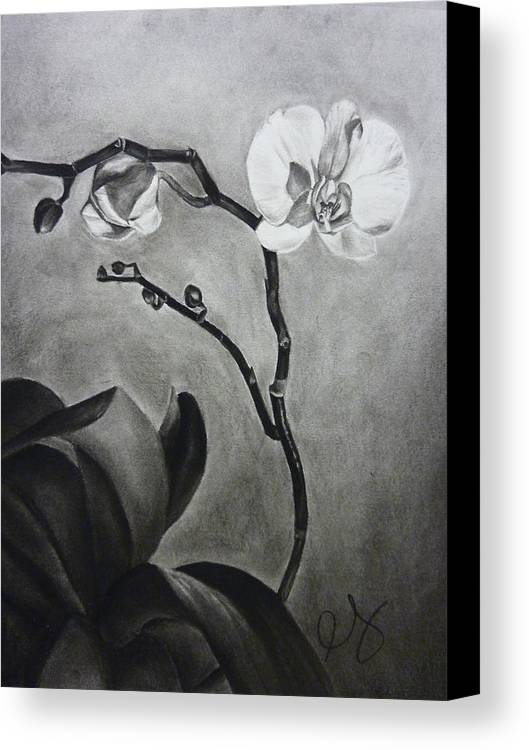 Orchid Canvas Print featuring the drawing Galen's Orchid by Estephy Sabin Figueroa