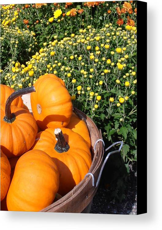 Pumpkins Canvas Print featuring the photograph Mini Pumpkins by Kimberly Perry