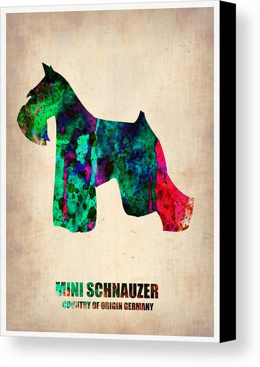 Miniature Schnauzer Canvas Print featuring the painting Miniature Schnauzer Poster 2 by Naxart Studio