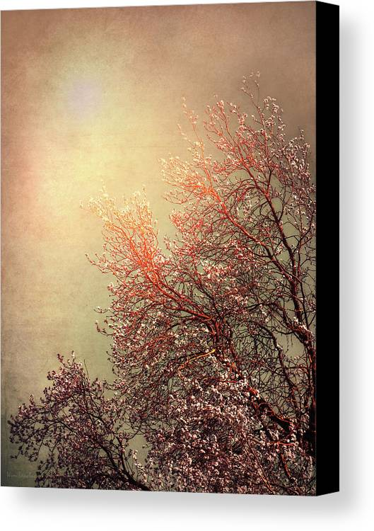 Vintage Canvas Print featuring the photograph Vintage Cherry Blossom by Wim Lanclus