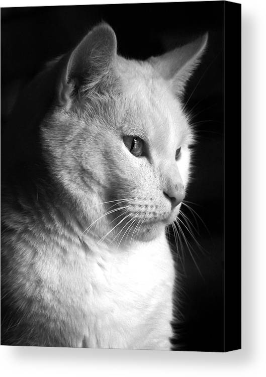 Nature Canvas Print featuring the photograph Watchful by Bob Orsillo