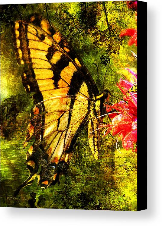 J Larry Walker Canvas Print featuring the digital art Tiger Swallowtail Butterfly Happily Feeds by J Larry Walker