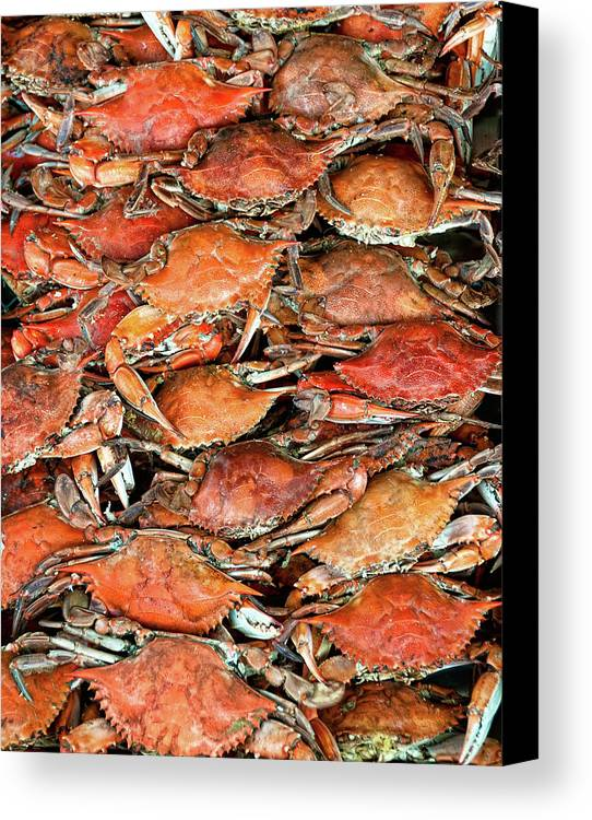 Vertical Canvas Print featuring the photograph Hot Crabs by Sky Noir Photography by Bill Dickinson