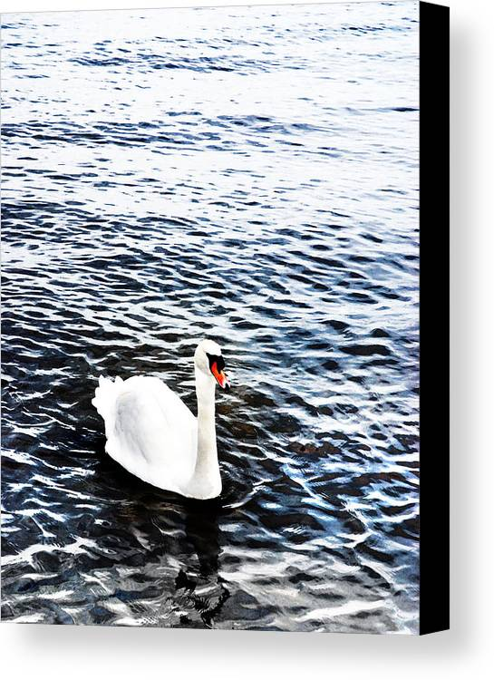 Swan Canvas Print featuring the photograph Swan by Mark Rogan