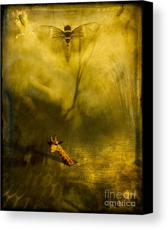 Giraffe Canvas Print featuring the photograph Giraffe And The Heart Of Darkness by Paul Grand