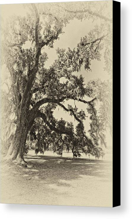 Evergreen Plantation Canvas Print featuring the photograph Southern Comfort Sepia by Steve Harrington