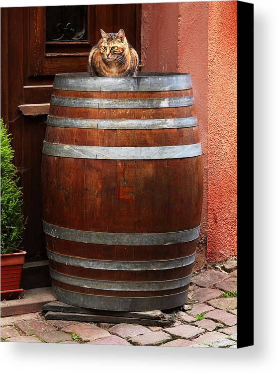 Cat Canvas Print featuring the photograph Cat Guarding A Wine Barrel In Alsace by Greg Matchick