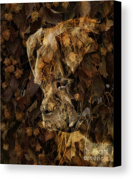 Dog Boxer Dog Canvas Print featuring the digital art Contemplation by Judy Wood