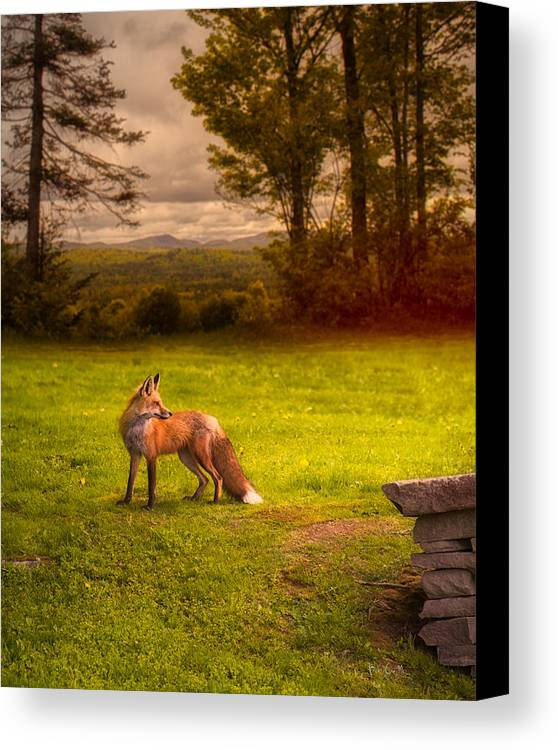 Fox Canvas Print featuring the photograph One Red Fox by Bob Orsillo