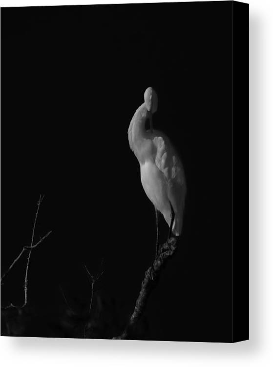 Black And White Canvas Print featuring the photograph shy by Mario Celzner