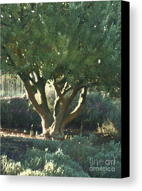 Corde Valle San Martin Ca Canvas Print featuring the painting Vineyard Olive by Artist and Photographer Laura Wrede