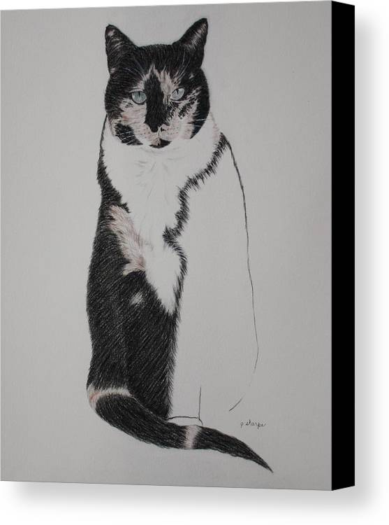 Spirit Cat Essence Canvas Print featuring the drawing Friend II by Patsy Sharpe