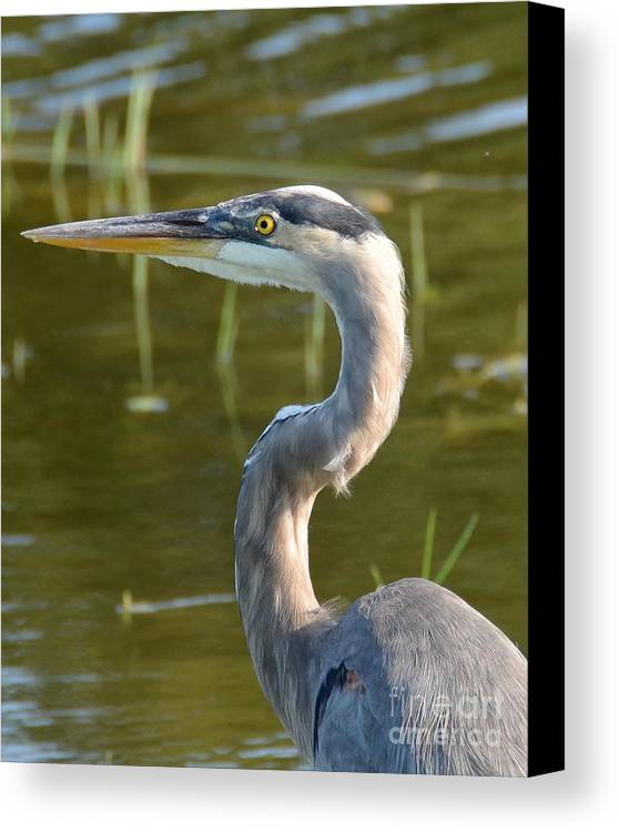 Heron Canvas Print featuring the photograph Too Close For Comfort by Carol Bradley