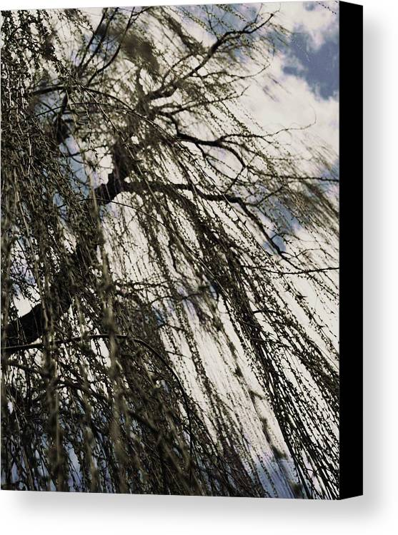 Willow Tree Canvas Print featuring the photograph Willow Tree by Todd Sherlock