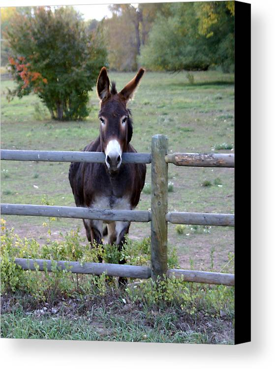 Donkey Canvas Print featuring the photograph Donkey At The Fence by D Winston