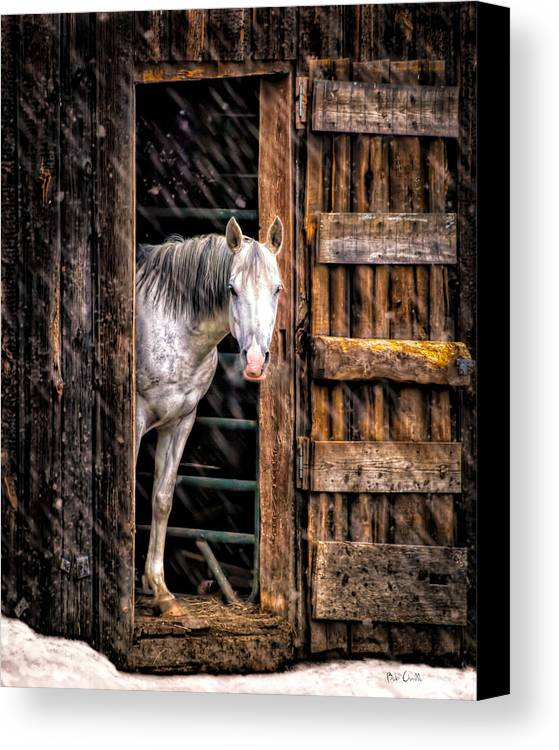 Horse Canvas Print featuring the photograph Watching The Snow Fall by Bob Orsillo