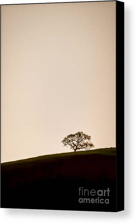 Black & White Canvas Print featuring the photograph Lone Oak Tree by Holly Martin