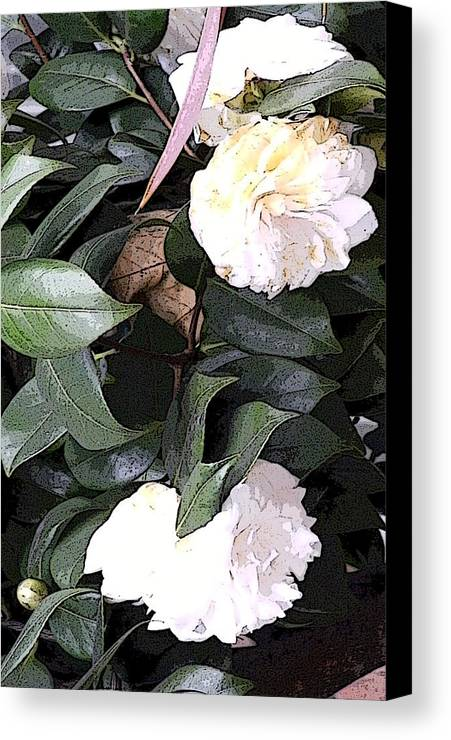 Camellia Canvas Print featuring the photograph White Camellia by Mindy Newman