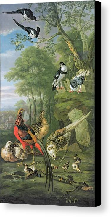 Ornithology Canvas Print featuring the painting Cock Pheasant Hen Pheasant And Chicks And Other Birds In A Classical Landscape by Pieter Casteels