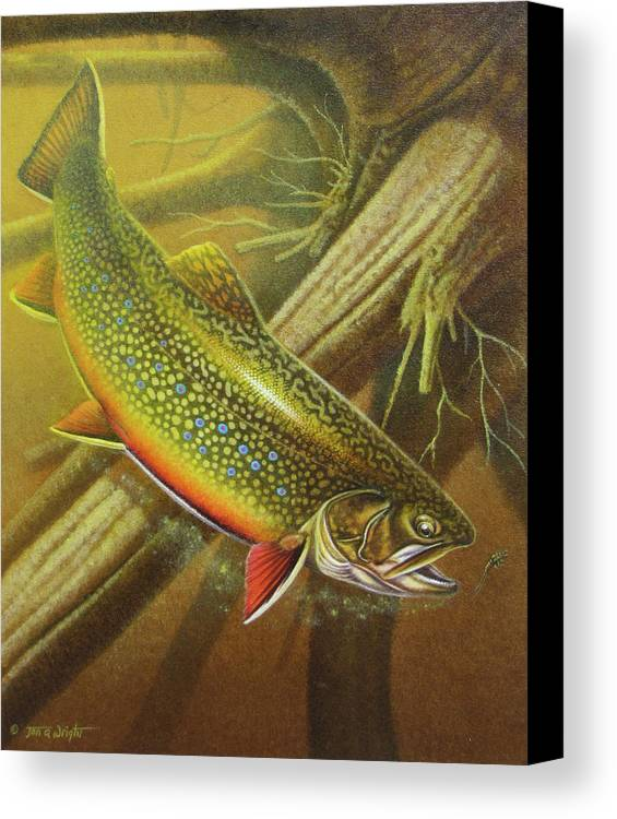 Jon Q Wright Brook Trout Fly Fishing Fly Fish Fishing Nymph Stream River Lake Canvas Print featuring the painting Brook Trout Cover by JQ Licensing
