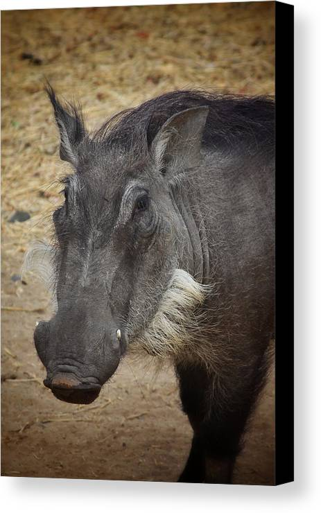 Boar Canvas Print featuring the photograph African Boar by Dave Hall