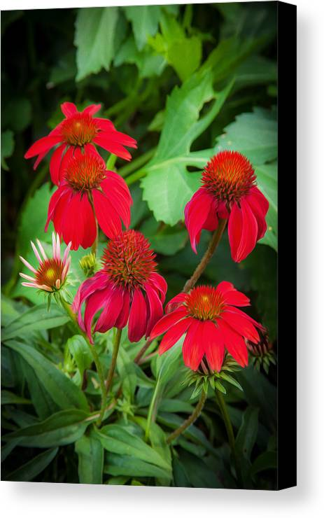 Echinacea Canvas Print featuring the photograph Coneflowers Echinacea Rudbeckia by Rich Franco