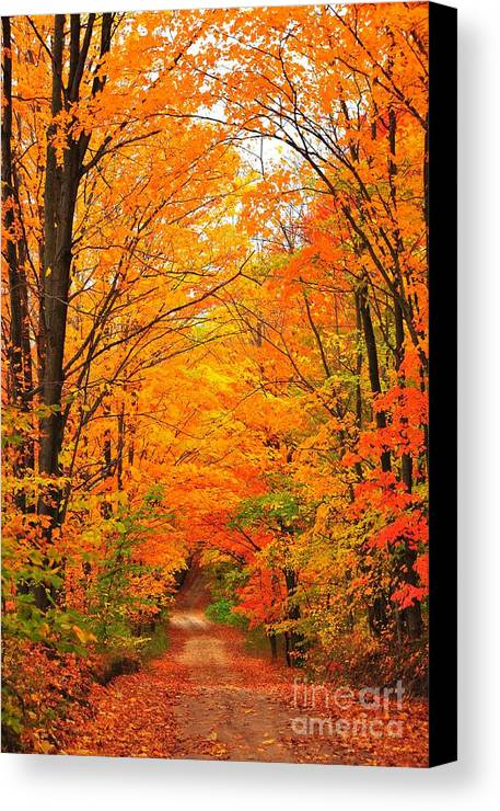 Autumn Canvas Print featuring the photograph Autumn Tunnel Of Trees by Terri Gostola