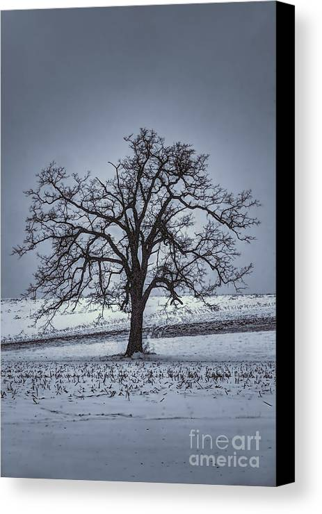 Tree Canvas Print featuring the photograph Barren Winter Scene With Tree by Dan Friend
