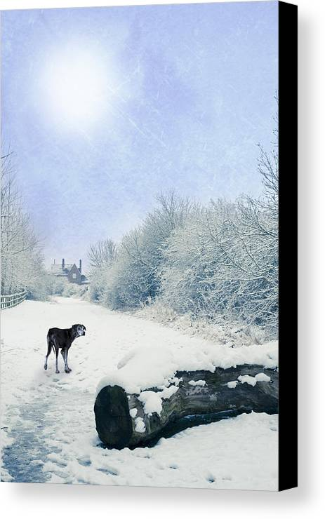 Alone Canvas Print featuring the photograph Dog Looking Back by Amanda Elwell