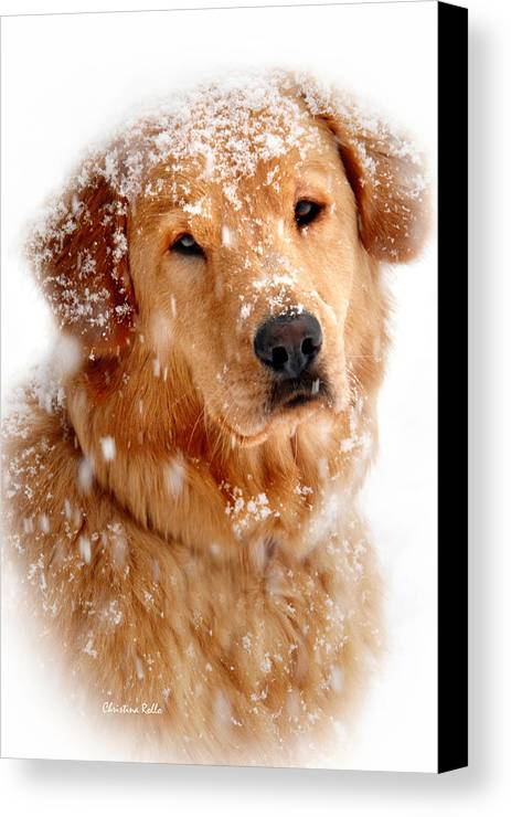 Dog Canvas Print featuring the photograph Frosty Mug by Christina Rollo