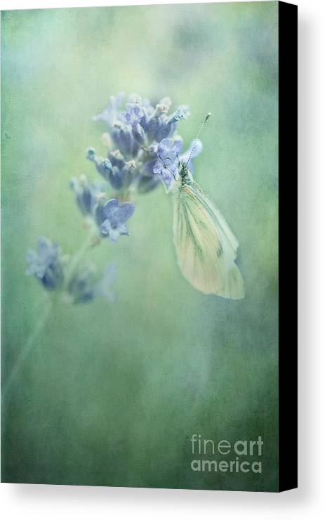Butterfly Canvas Print featuring the photograph Land Of Milk And Honey by Priska Wettstein