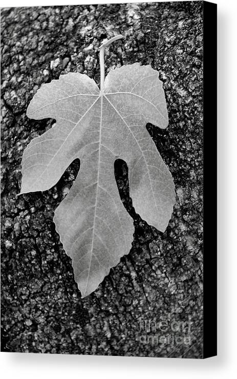 Leaf Canvas Print featuring the photograph Leaf On Bark by Andrew Brooks
