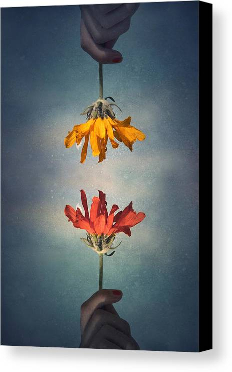Middle Ground Canvas Print featuring the photograph Middle Ground by Tara Turner