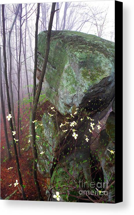 Usa Canvas Print featuring the photograph Misty Woods by Thomas R Fletcher