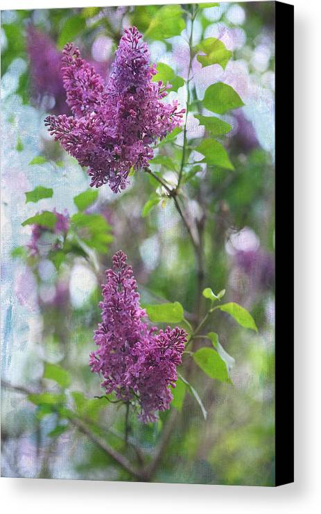 Lilacs Canvas Print featuring the photograph On The Bush by Rebecca Cozart