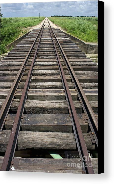 Nature Canvas Print featuring the photograph Railroad Tracks by Sami Sarkis