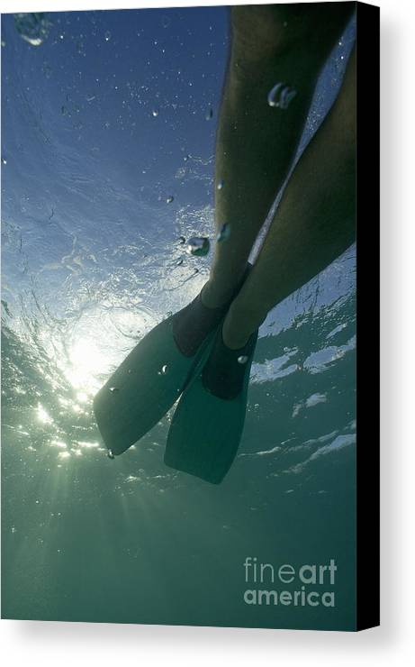 Snorkeling Canvas Print featuring the photograph Snorkeller Legs With Flippers Underwater by Sami Sarkis