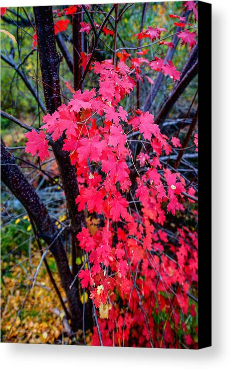 Fall Canvas Print featuring the photograph Southern Fall by Chad Dutson