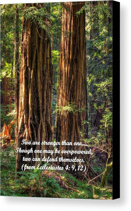 California Canvas Print featuring the photograph The Strength Of Two - From Ecclesiastes 4.9 And 4.12 - Muir Woods National Monument by Michael Mazaika