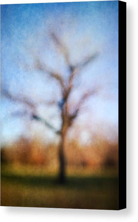 Blur Canvas Print featuring the photograph Warner Park Tree by David Morel
