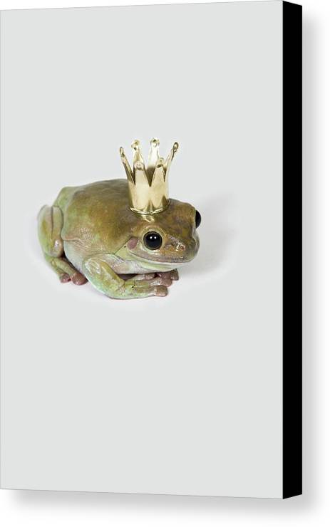 Vertical Canvas Print featuring the photograph A Frog Wearing A Crown, Studio Shot by Paul Hudson