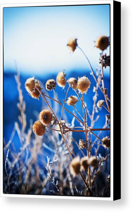 Nature Canvas Print featuring the photograph Against The Blue Sky by Lisa Spencer