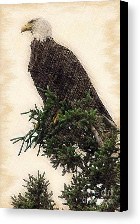 Bald Eagle Canvas Print featuring the photograph American Bald Eagle In Tree by Dan Friend