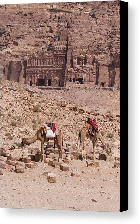Vertical Canvas Print featuring the photograph Camels In Front Of The Royal Tombs Petra by Martin Child