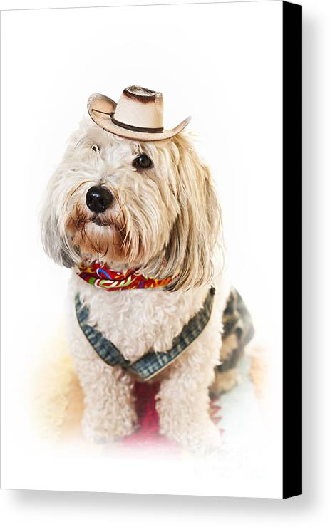 Dog Canvas Print featuring the photograph Cute Dog In Halloween Cowboy Costume by Elena Elisseeva