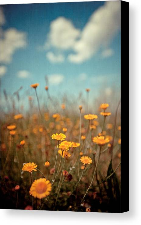Vertical Canvas Print featuring the photograph Daisy Meadow by Boston Thek Imagery