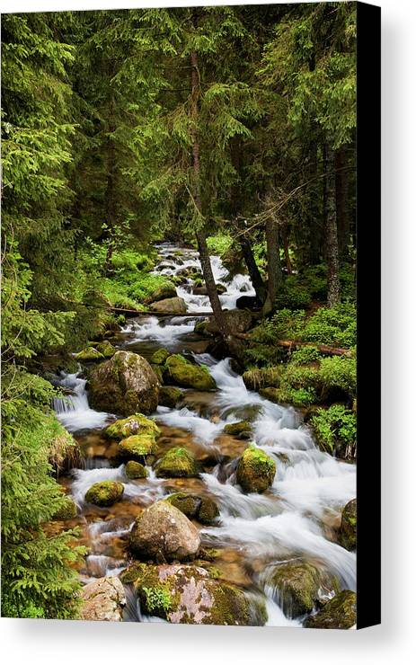 Beautiful Canvas Print featuring the photograph Forest Stream In Tatra Mountains by Artur Bogacki